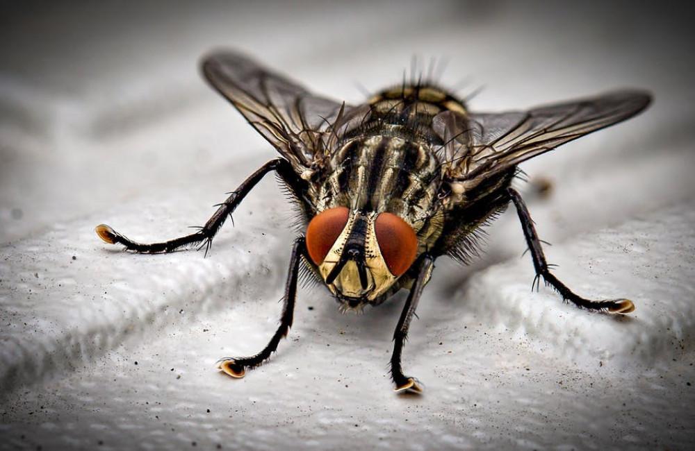 Hor houdt insecten buiten de deur in de lente