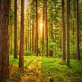 Waarom duurzame app TreeClicks echt werkt