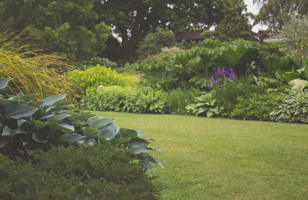 Hoe planten te verzorgen in de winter? Tips voor een mooie tuin het hele jaar door